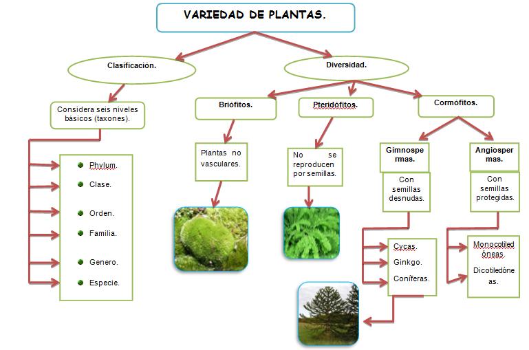 Con ciencia para la vida conceptos de botanica paul for Clasificacion de las plantas ornamentales