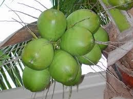 Benefits And Nutritional Of Coconuts