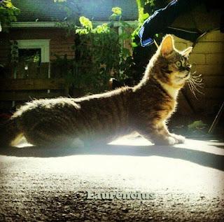 Kucing-Kurcaci-Lil-Bub_6