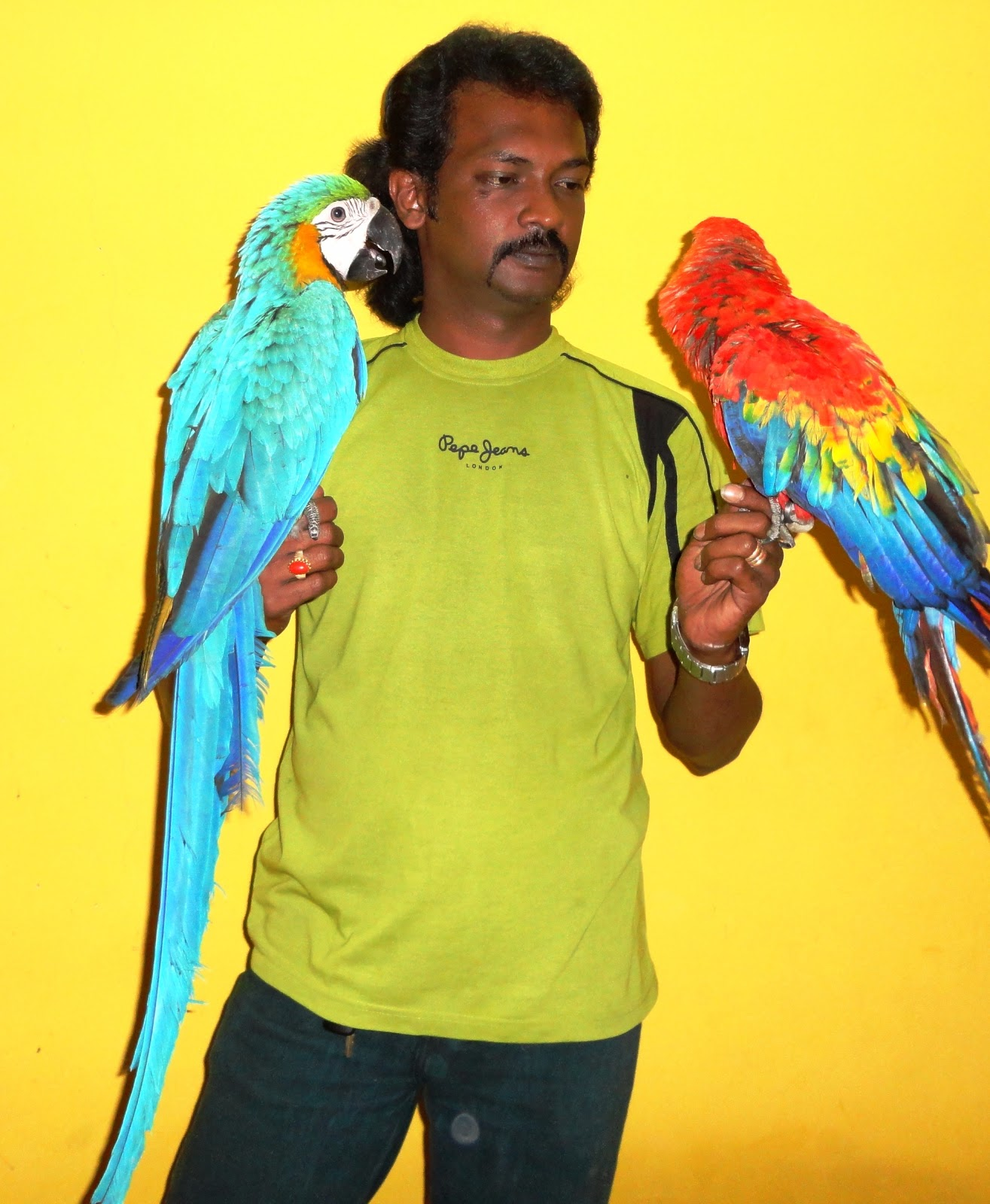 How Much Does a Hyacinth Macaw Cost  HowMuchIsItorg