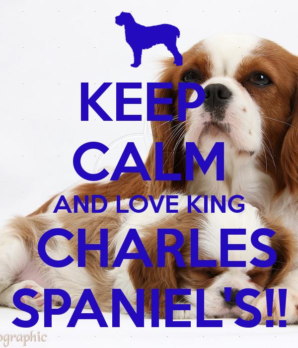 I love my Cavalier