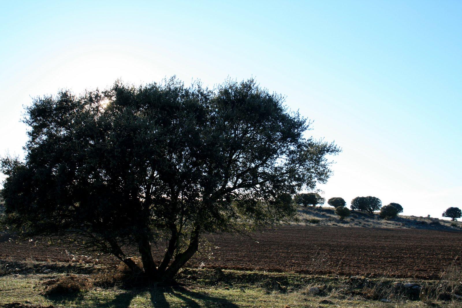 Soria provincia fotonane