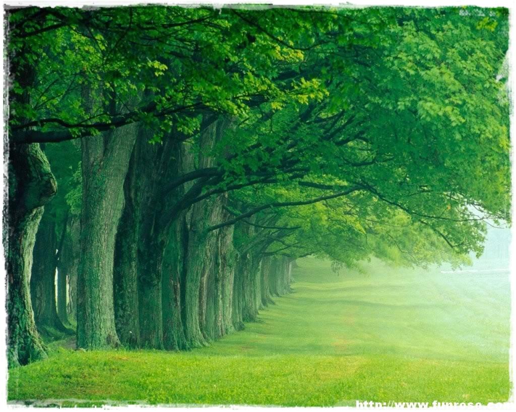 http://2.bp.blogspot.com/-fNyVB-EA0PU/Tv8nANbr0mI/AAAAAAAAAFM/QN0gs0CDmlM/s1600/5.jpg