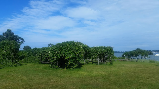Grape Island-Boston-MA-Travel-The-East