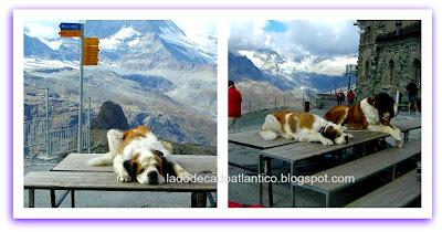Cadela e filhote de São Bernardo em frente ao Matterhorn (Cervino), Suíça.