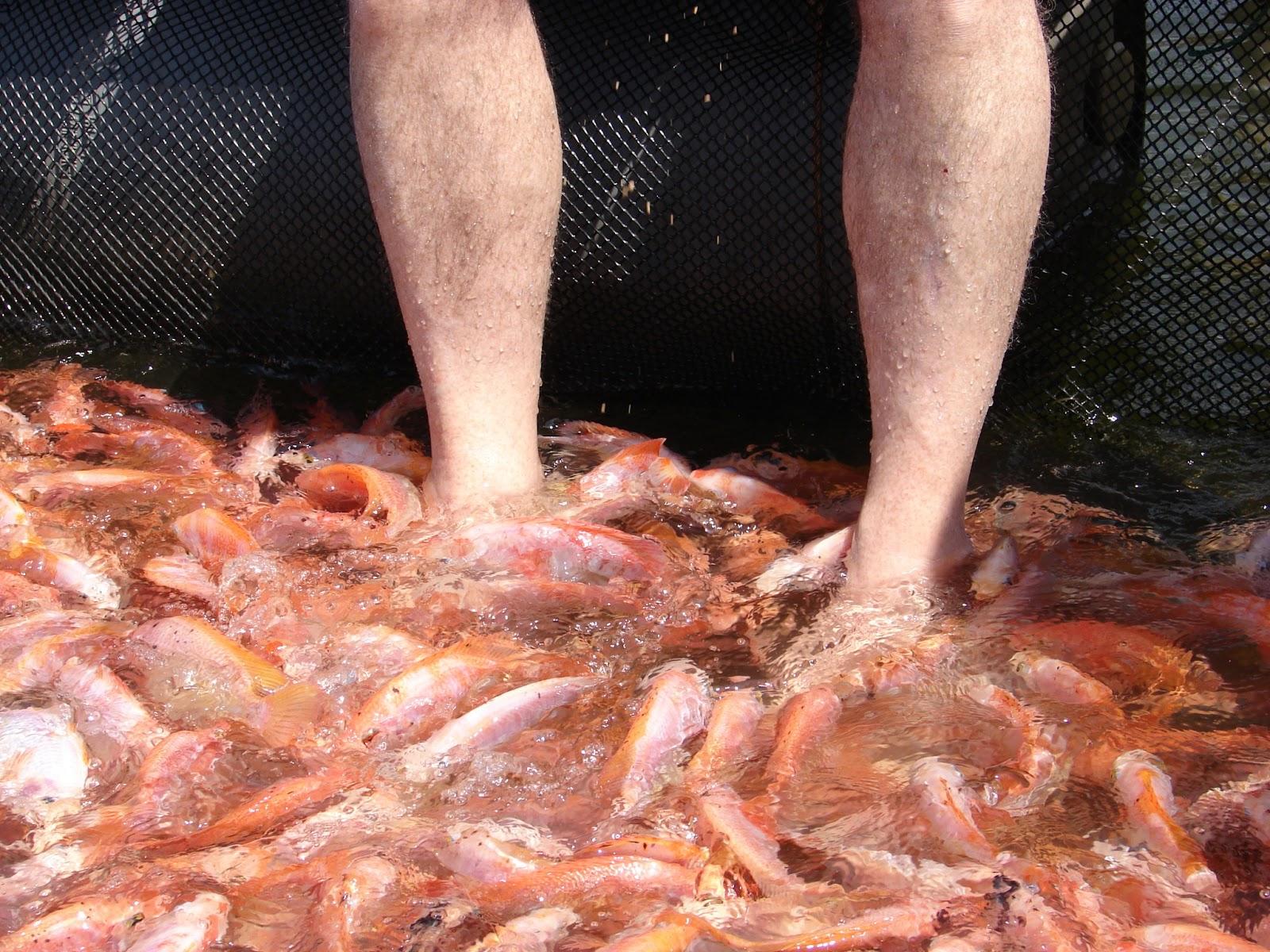 Sandra scott travel images for Fish foot massage