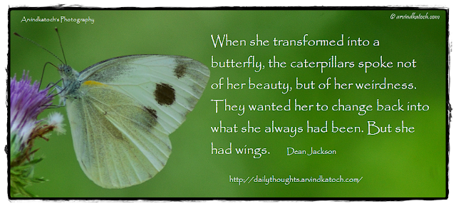 Butterfly, Thought, Quote, Daily Thought, Caterpillars,