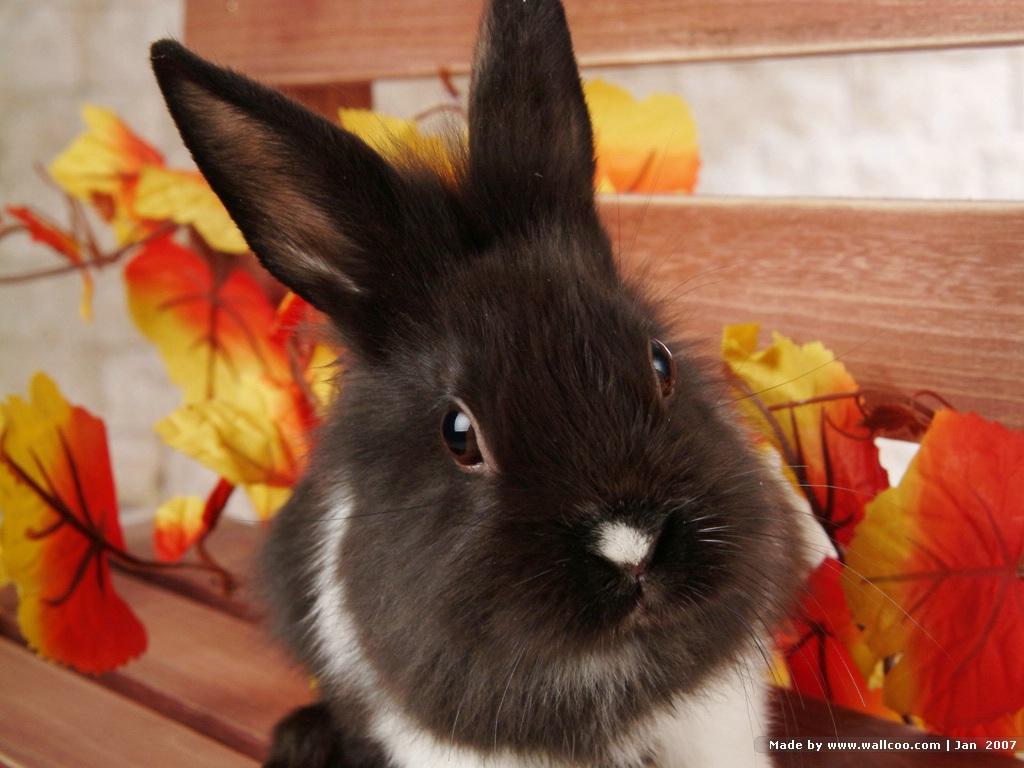 http://2.bp.blogspot.com/-fPVipdYW66A/TnlLO-znwaI/AAAAAAAAASQ/HaSCH7TU434/s1600/rabbit-wallpaper-7-761767.jpg