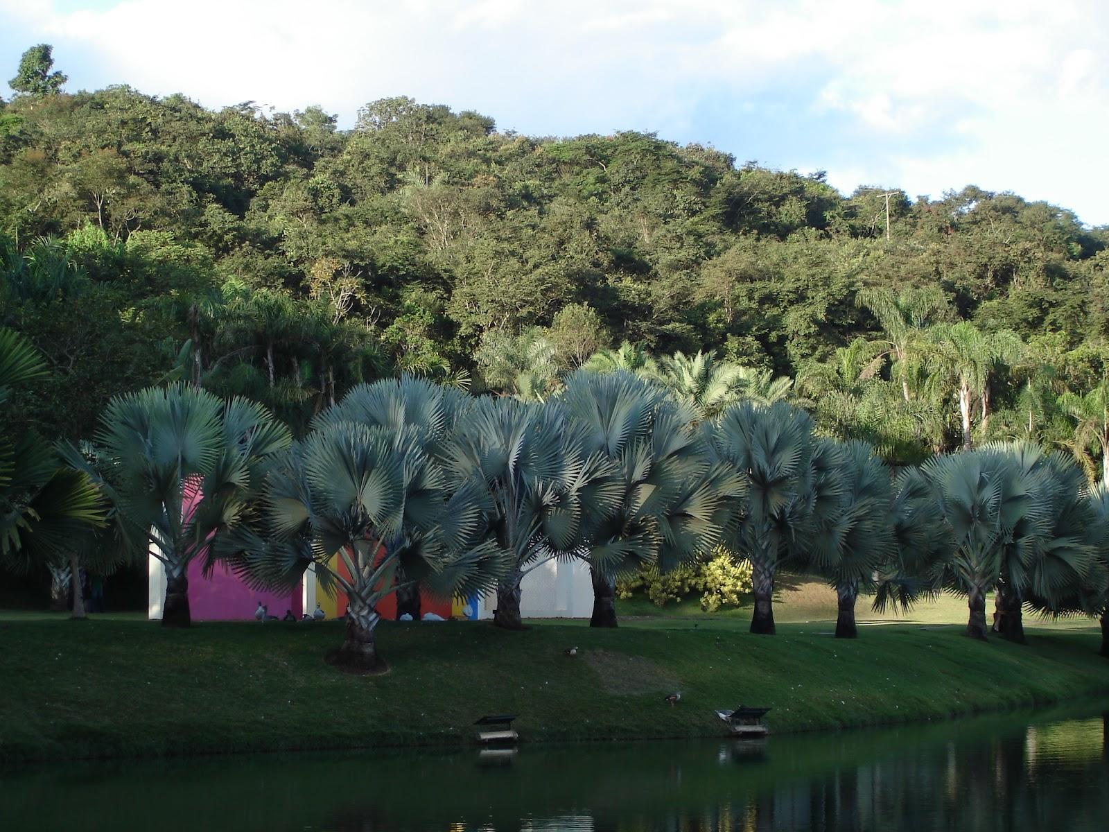Famosos Brazil Business Tourism: INHOTIM, THE GOLDEN MINE OF ART, BUILT BY  GO89