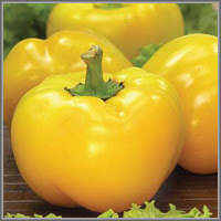 Сладкий перец сорт «Золотой юбилей»