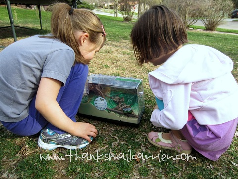 Backyard Safari Land & Water Habitat