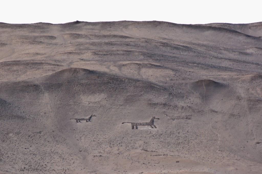 Geoglyphs Arica dogs