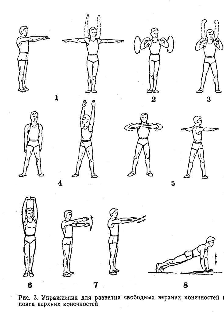 Упражнения для развития основных мышечных групп