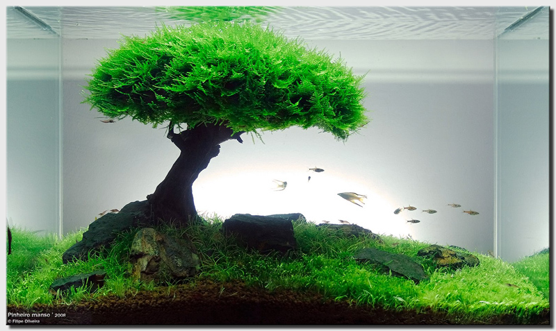 House Design And Interior Decoration How To Make Aquascape With Simple Design