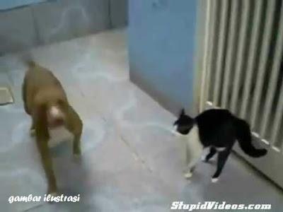 gambar anjing vs kucing
