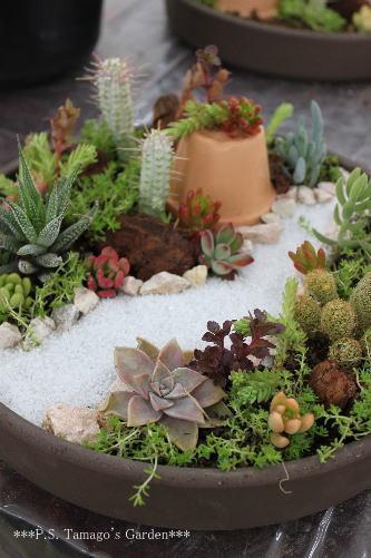 mini jardim suculentas : mini jardim suculentas:Mini Succulent Fairy Garden