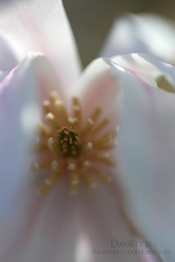 Gorgeous Spring Blooms