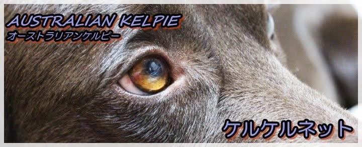ケルピーを探せ!