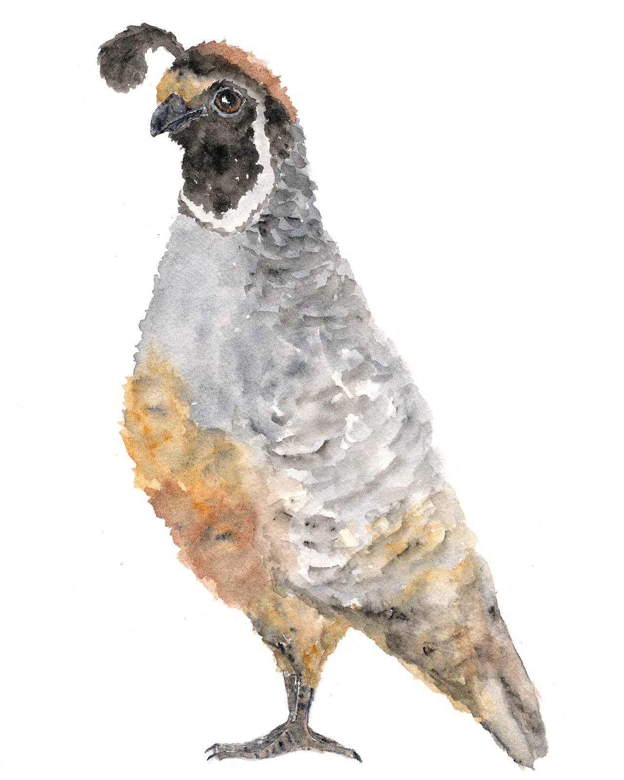 Quail Paintings For Sale