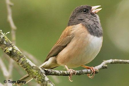 essay on save birds and animals