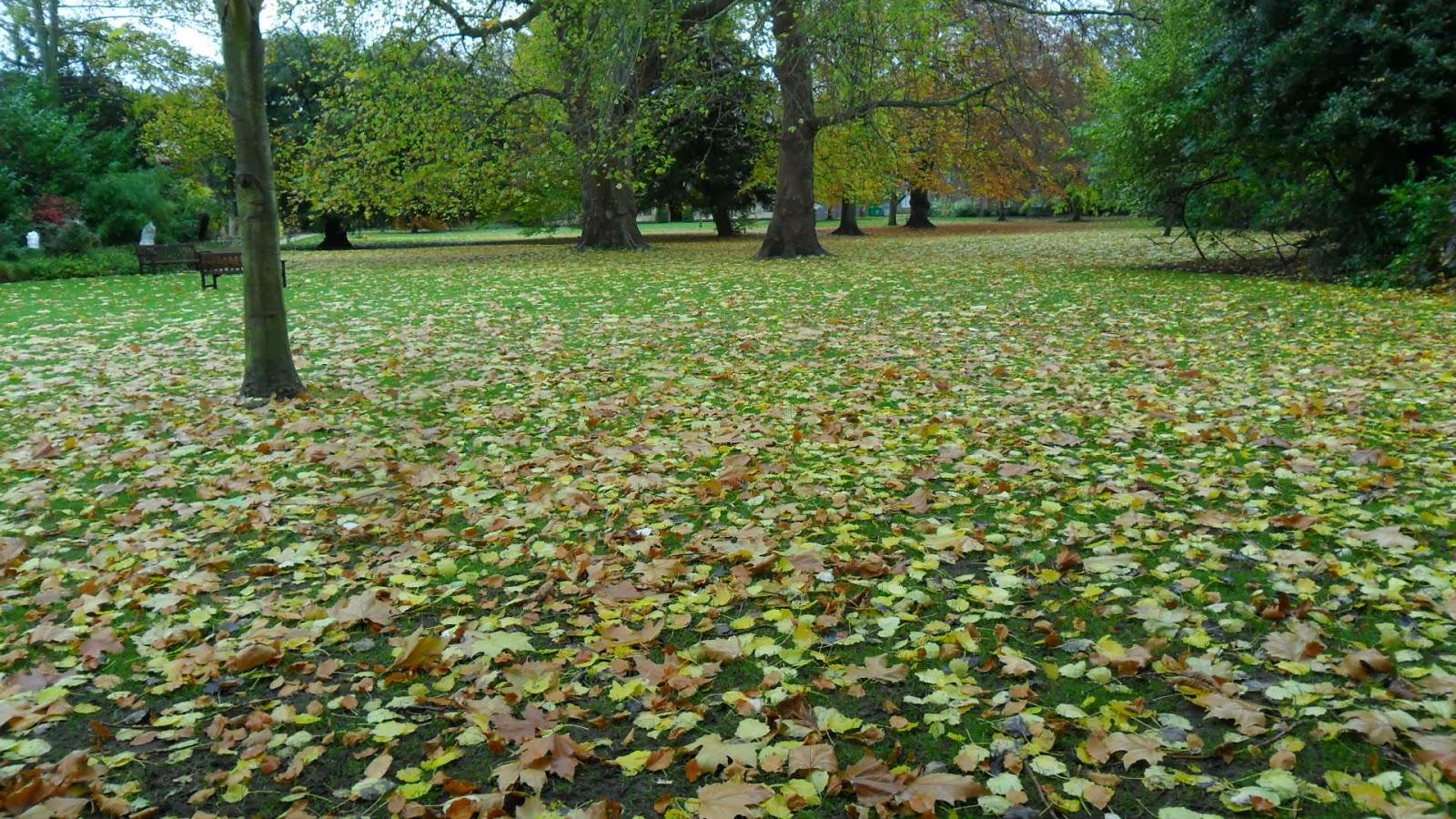 Worcester College Gardeners A Very Leafy Week