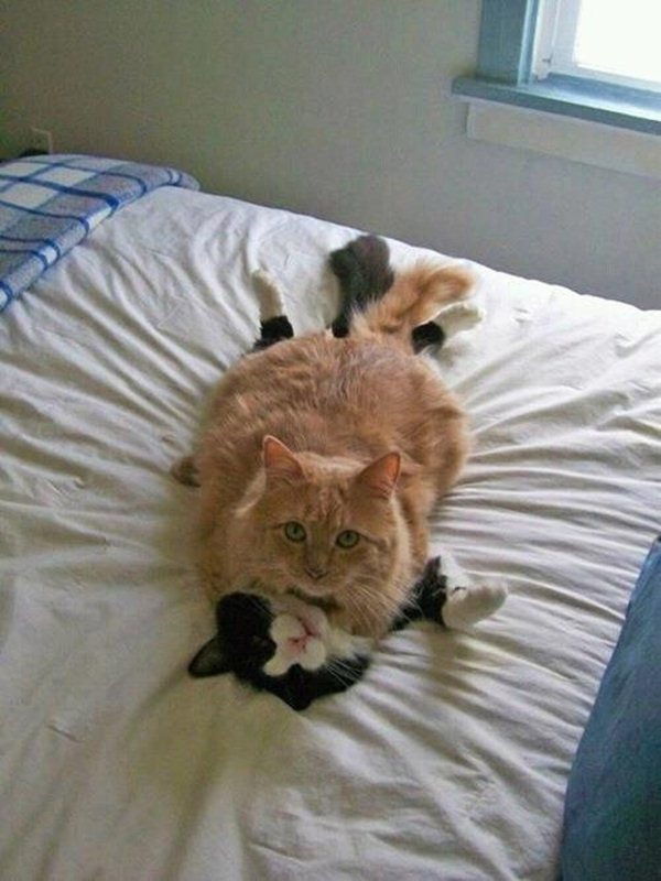Funny cats - part 56 (30 pics + 10 gifs), funny pictures of cats, funny cat pictures, cat pics, funny cat photos