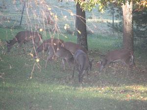 Hungry Deer