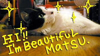 matsu-cat-japan-1