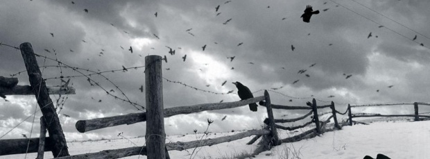 guzel kus facebook kapak resimleri+%252813%2529 35 En Güzel Facebook Kuş Kapak Resimleri indir