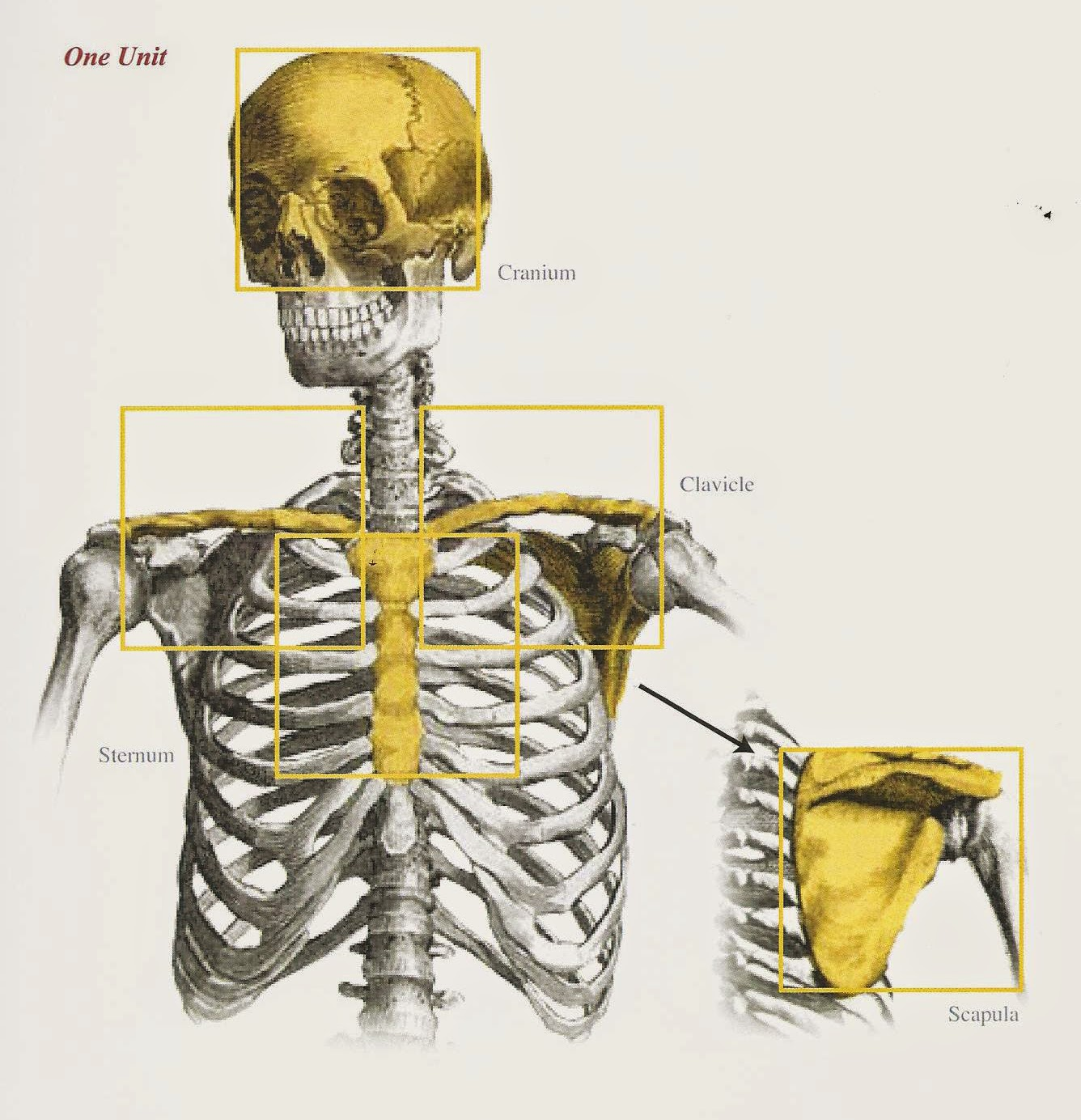 Studio Incamminati Blog: On Proportion and using the Cranial Index