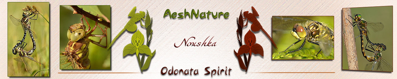AeshNature