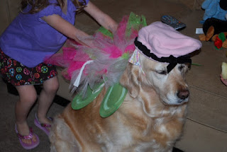 dog dressed up, dog wearing a hat