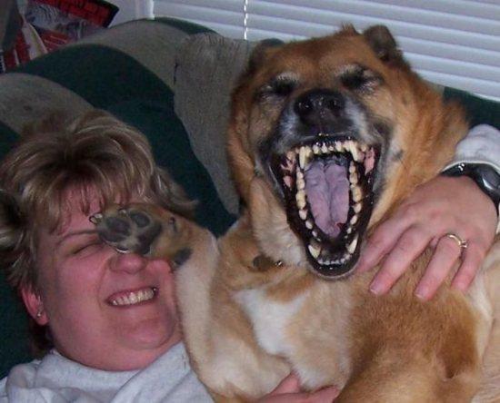 cachorro sorrindo muito de cocegas