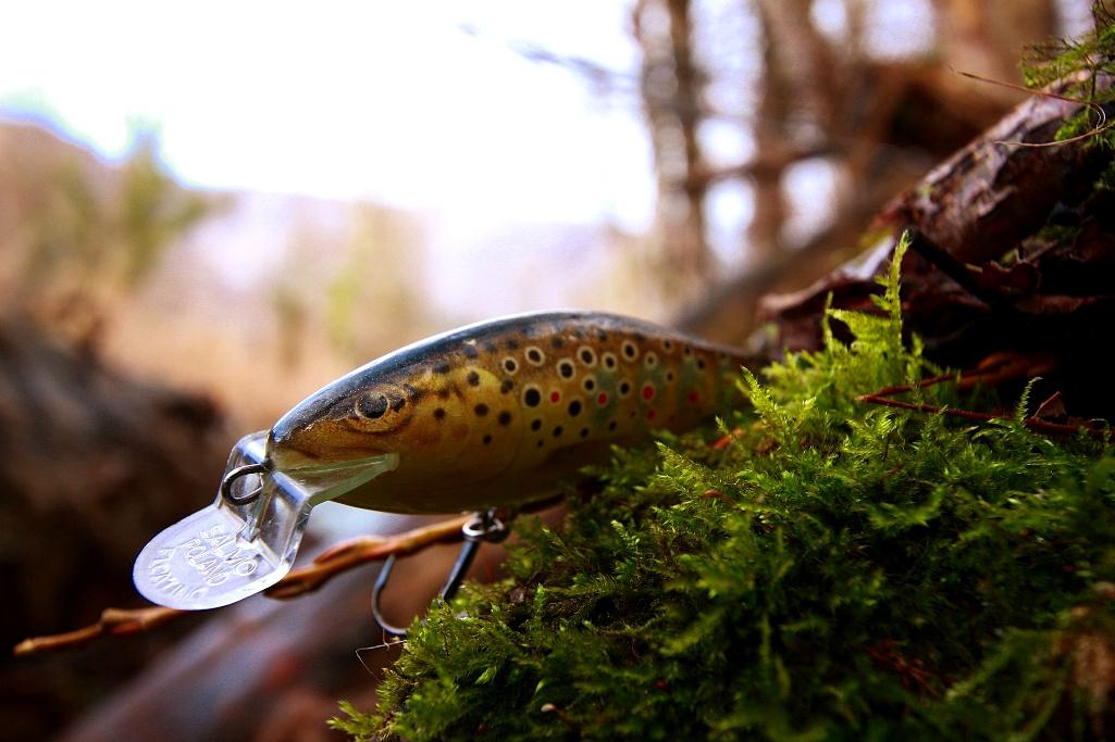 Fishing in croatia and in the neighbourhood brown trout for Fishing in croatia