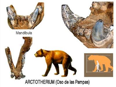 Ursidae fosiles en Argentina Arctotherium