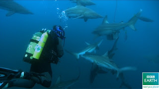 What's More Dangerous Than Diving with 100 Sharks?