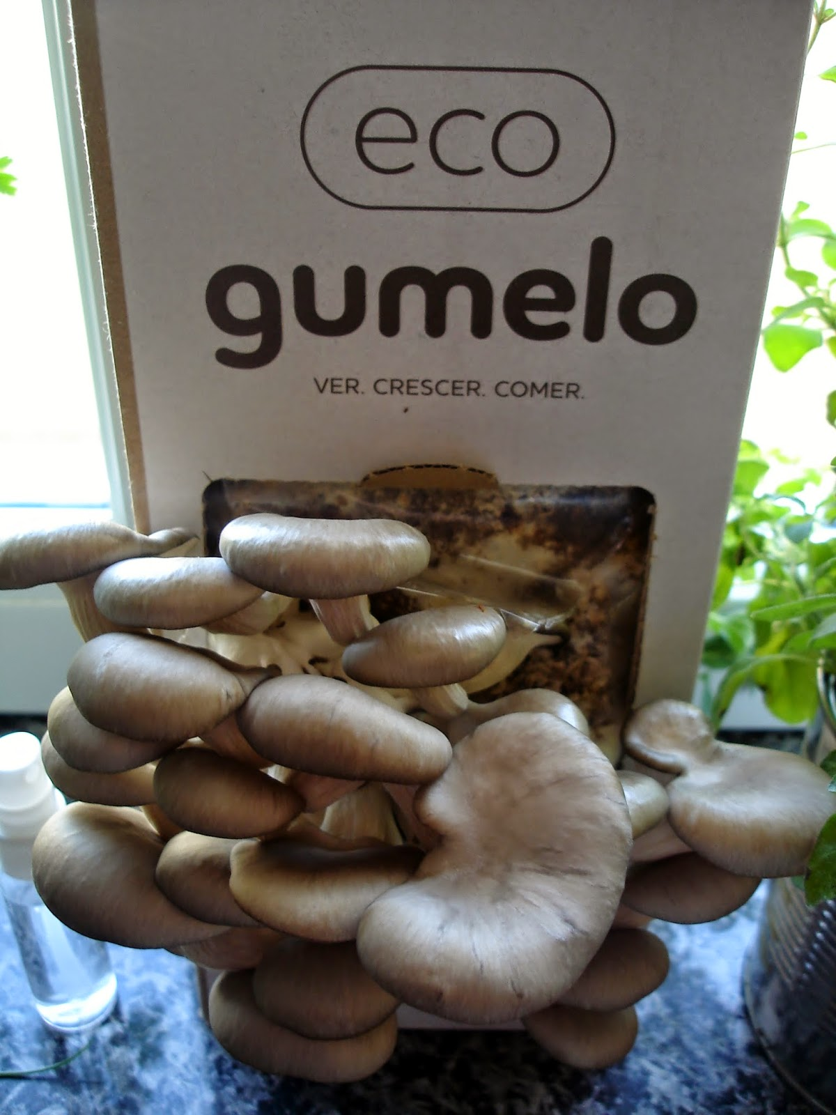 Gumelo