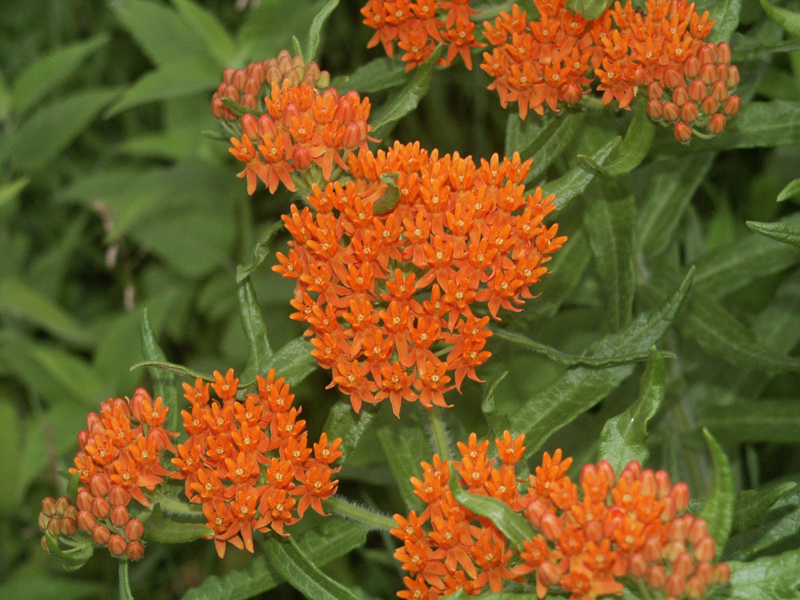 http://2.bp.blogspot.com/-fTGRKSdfWqM/TfZS8vS9vtI/AAAAAAAAAJk/PC-eL9tPQeY/s1600/Orange+Flowers+Wallpaper7.jpg