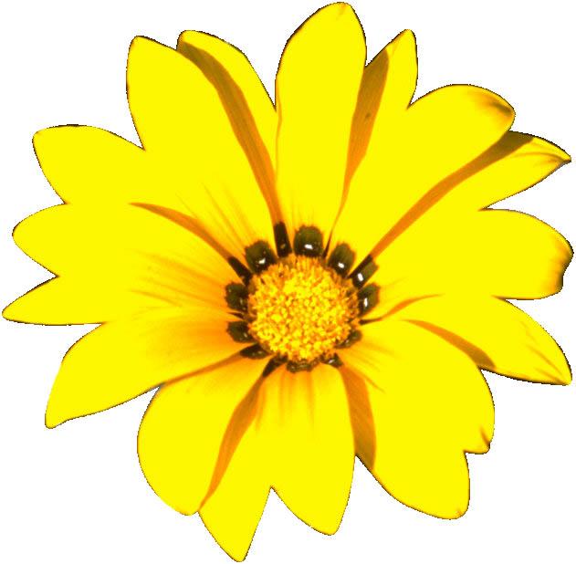 Beberapa gambar berikut merupakan bontoh gambar bunga dalam satuan ...