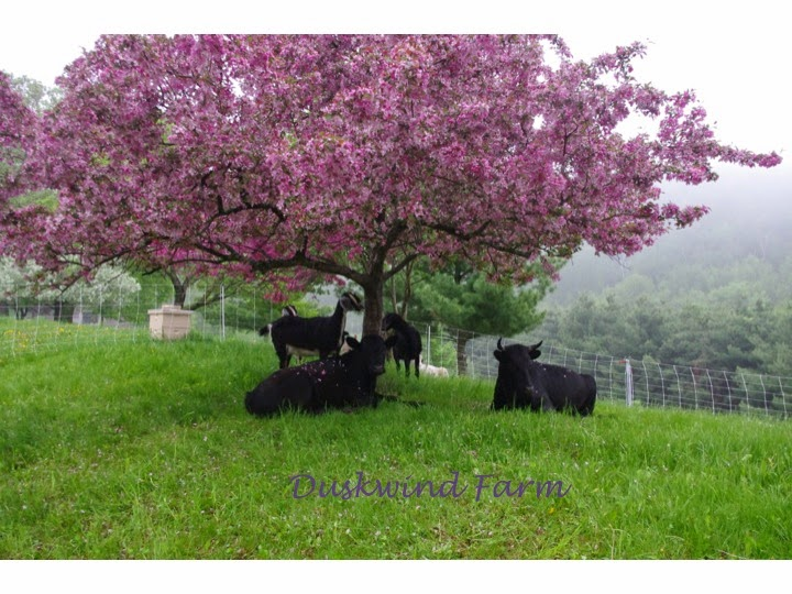 Duskwind Farm
