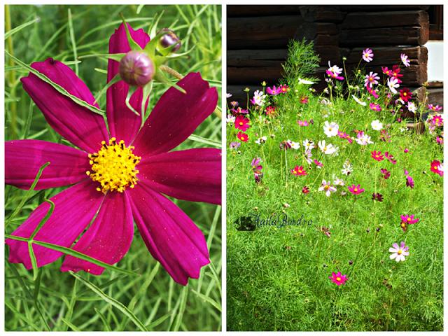 floare muzeul satului bucovinean suceava