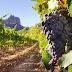 Estos son 3 destinos para los amantes del vino