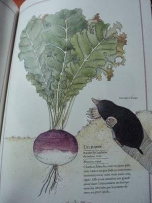 Visuel des légumes