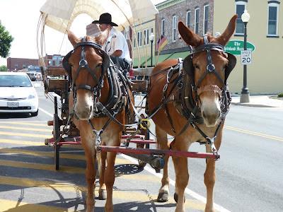 mule tour