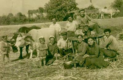 παλιά καλλιέργεια ζαχαροκάλαμου