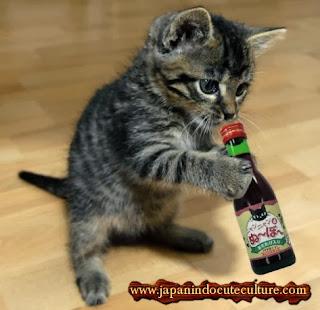 kucing minum wine dari jepang