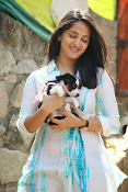Anushka with Puppy at Blue Cross Pet Carnival Press meet-thumbnail-15