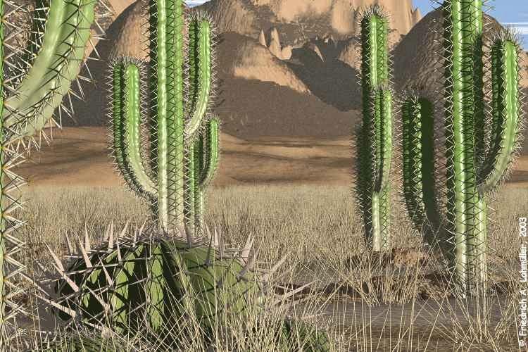 Manfaat Tumbuhan Kaktus