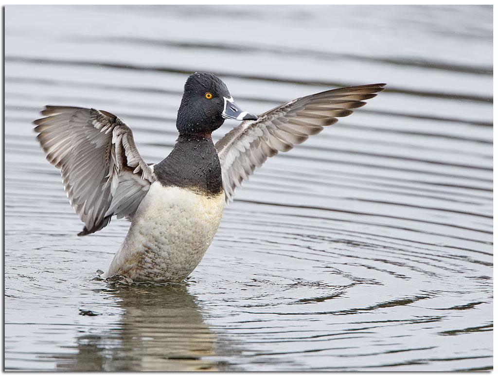 Duck Me Fast Food