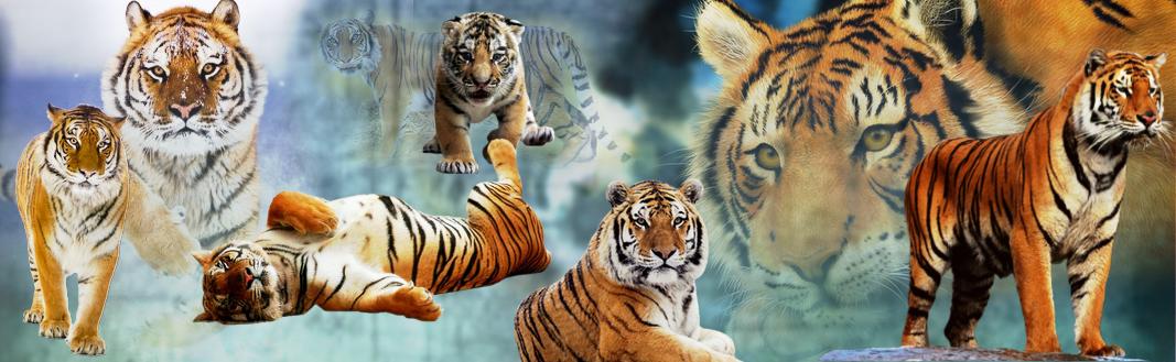 Tygrovy zápisky